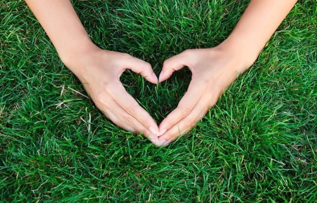 grass,love,heart,hands